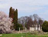 2. Kalocsay Éva: Oszlopok virágzó fával